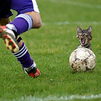 Scared kitty in soccer