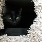 Joyce in the kitty condo