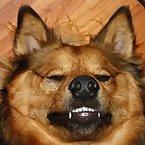 Hmmmmmmmm... am I a upside down dog