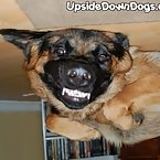 Hmmmmmmmm... am I a upside down dog