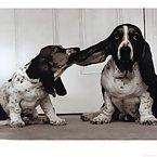 Super cute doggy photos