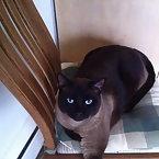 My cat..