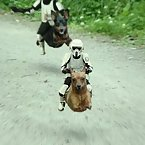 Animals and star wars