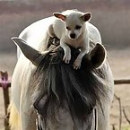 Dogs riding