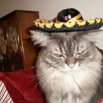 my mexican cats