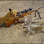 Animals with Guns - Cat Sniper, Monkey with a gun, Squirrel Machine Gu