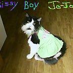 Jo-Jo in a dress