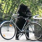 Bears and Bikes