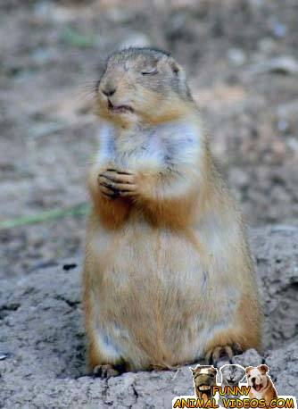 Praying Animals Pics @ Funny Animal Videos