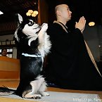 Praying Animals