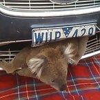 Koala Mechanic
