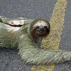 Strangest Animals in the world