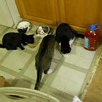 Joyce, Rambo, & Chloe (Sibilings)