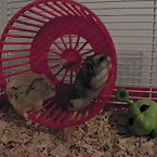My hamsters