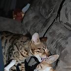 Tybalt and Bambi