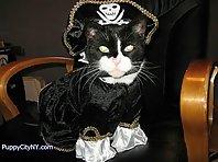Pirate Pets!