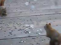 Squirrel Epic Fight!