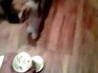 Smarty Cat - Cat Picks Her Own Food