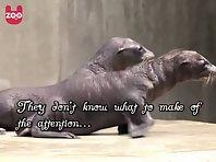 Newborn sea lions