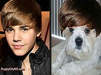 Dogs Who Look Just Like Justin Bieber