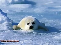 Cute Seal Pups!