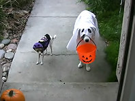 Trick or Treat- - Funny Dogs Halloween