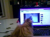 Gracie the Cairn sings to her Youtube Video