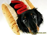 Dogs Dressed As Hotdogs