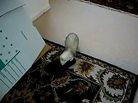 Ferret and Slippers