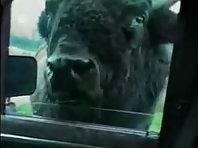 Funny Video Animals