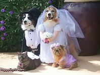 Dog Weddings!