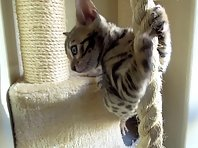 Tarzan kitten