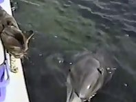 Dolphin and cat greet each other