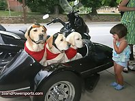 Motorcycle Dogs!