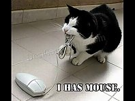 Very Funny Cats I bet you will laugh =)
