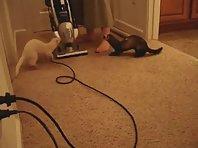 Vacuum Attack