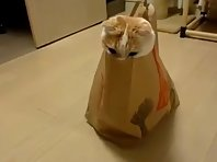 Cat's In The Bag!