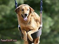 Swinging Pets!
