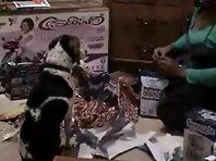 Sonic the Crazy Beagle: Christmas with a Crazy Beagle