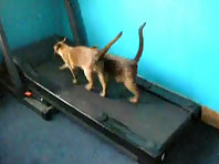 funny cats kittens running on the treadmill