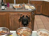 Hungry Pets Looking For Holiday Turkey!