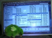 Greenie the Chick surveys computer world
