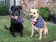 Patriotic Pets! 4th of July Dogs