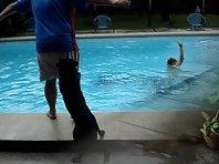 Toyo Lifeguard Labrador