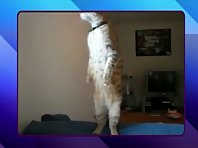 An Amazing Cat Standing Up Exclusive Feature and Cute Kitten Update