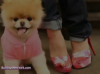 Boo The Dog Goes Shopping!