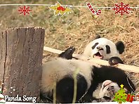 Merry Christmas and Happy New Year from Giant Pandas!
