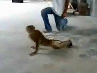 Buff monkey