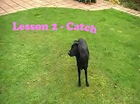 Millie's Training Guide - Lesson 2