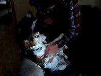 Beagle opera!